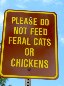 kauai feral chicken sign