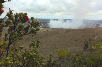 Hawaii Kilauea ohia lehua