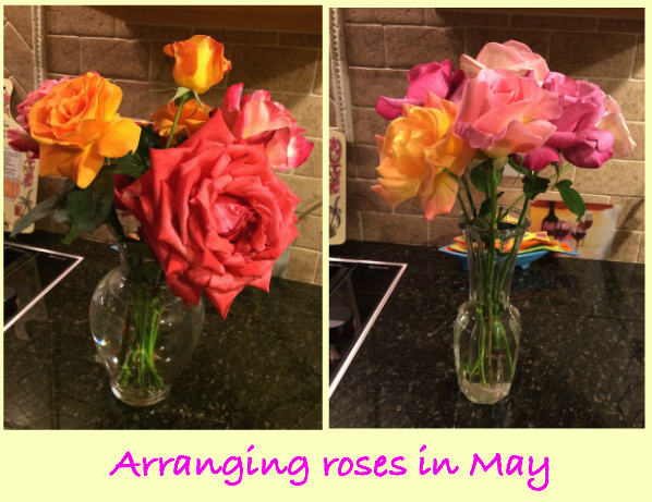 arranging roses in may