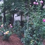 roses-fall - 3