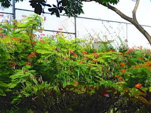 plantation-plants