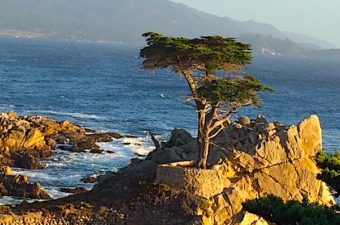 The California central coast includes the oceanside towns of Carmel and Pacific Grove and Monterey. Monterey Bay Aquarium, historic missions, and more!