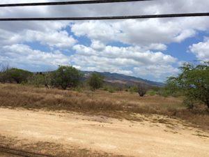 hawaiian-railway-ewa