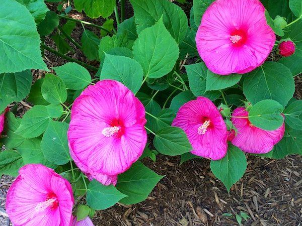 Garden tour Casa Bouquet through the year