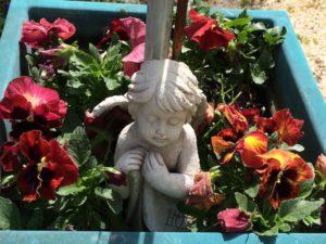 garden-pansies