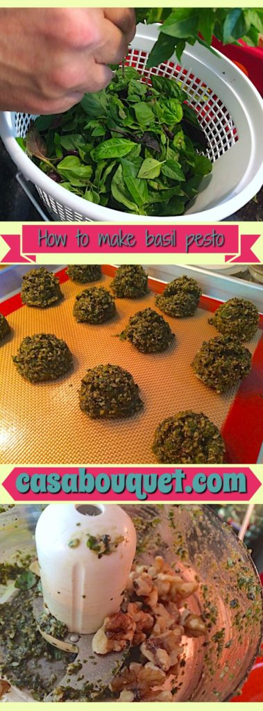 How to make basil pesto with basil, walnuts, garlic, parmesan, and olive oil. Will keep in refrigerator or freezer. Use fresh basil from the garden or farmers market.