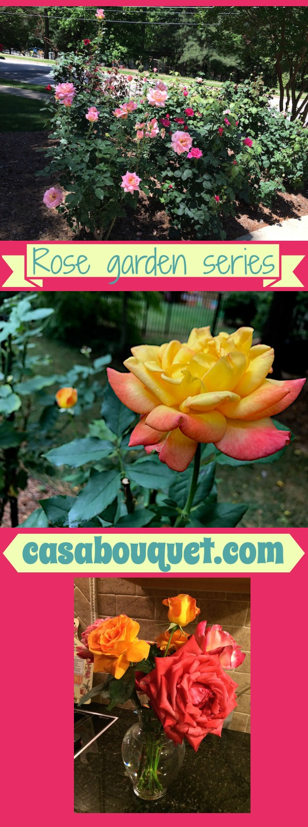 How do you start a rose garden? Find tips for selection, fragrance, planting, maintenance, and cutting and arranging. Posts for early spring, May, and fall.