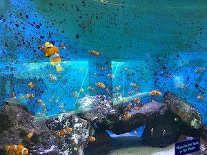 sea-life-clownfish