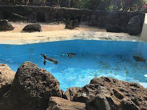 sea-life-penguins