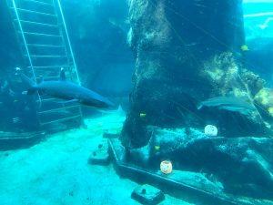 sea-life-sharks