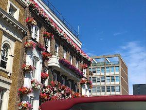 london-summer-flowers