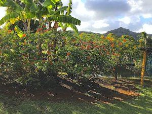 wailua-kauai-19