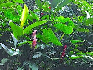 wailua-kauai-8